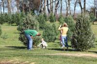 Christmas Tree Adventure - Tree Farm in Hendersonville TN