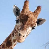 Kids love animals, here are some of the best animal attractions in Nashville