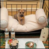 Pampered Pets at the Hermitage Hotel in Nashville