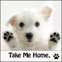Adopt a pet in Nashville and middle Tennessee