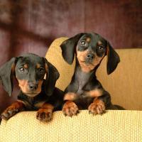 Nashville Pet Lovers Guide
