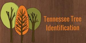 Tennessee Tree Identification