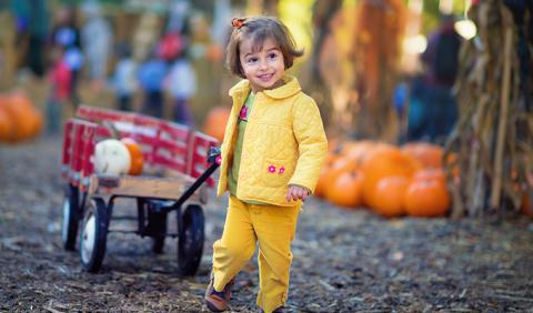 Little Girl pulling a wagon with a pumpkin at Fall Festival