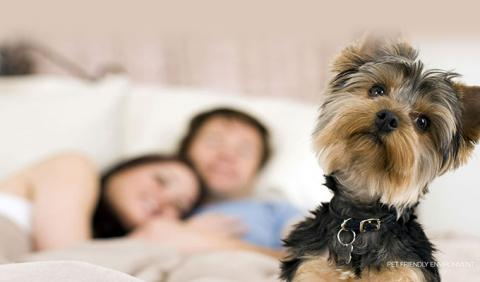 Nashville's Best Pet Friendly Hotels