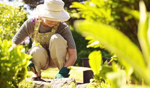 Gardening and Outdoor Living in Nashville