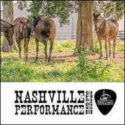 Nashville Performance Horses