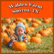 Walden Pumpkin Farm