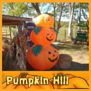 PUMPKIN HILL Pumpkin Patch, Hay Rides, Fun for All!