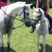 Horseback Riding, Riding Lessons, Horses, Stables,Horse Trails,Trail rides