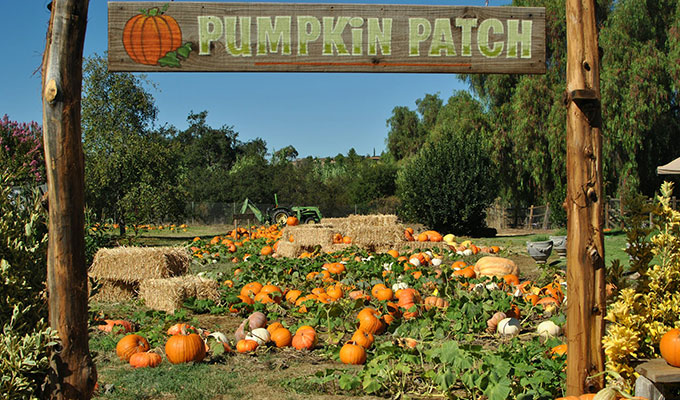 Nashville area Pumpkin Patches