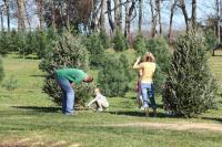 Christmas Tree Adventure - Tree Farm in Hendersonville TN