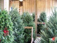 Country Cove Christmas Tree Farm
