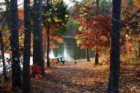 Enjoy Fall Leaves at Bowie Park & Nature Center Fairview Tennessee