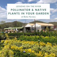 Lessons on the River: Pollinator & Native Plants in Your Garden