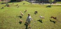 My Second Home Dog Running Yard
