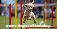 Greymont Kennel and Training Academy