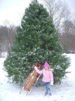 Live Christmas Trees from Treeland in Watertown TN