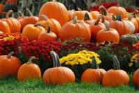 Pumpkin patches at Cheekwood Gardens