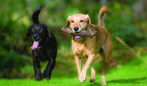 Dog Friends loving a Nashville area dog park