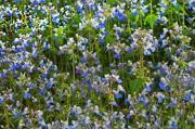 Wildflower Hikes