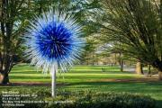 Chihuly at Cheekwood