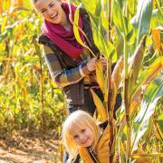 Come to Lucky Ladd's Corn Maze Adventure and have fun getting lost!