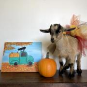 Painting Pumpkins with Shenanigoats