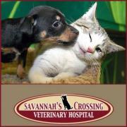 Savannah's Crossing Veterinary Hospital Murfreesboro Tennessee