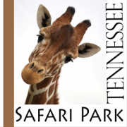Tennessee Safari Park in Alamo Tennesee
