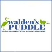 Walden's Puddle