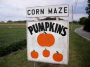Boyd's Pumpkin Patch and Corn Maze